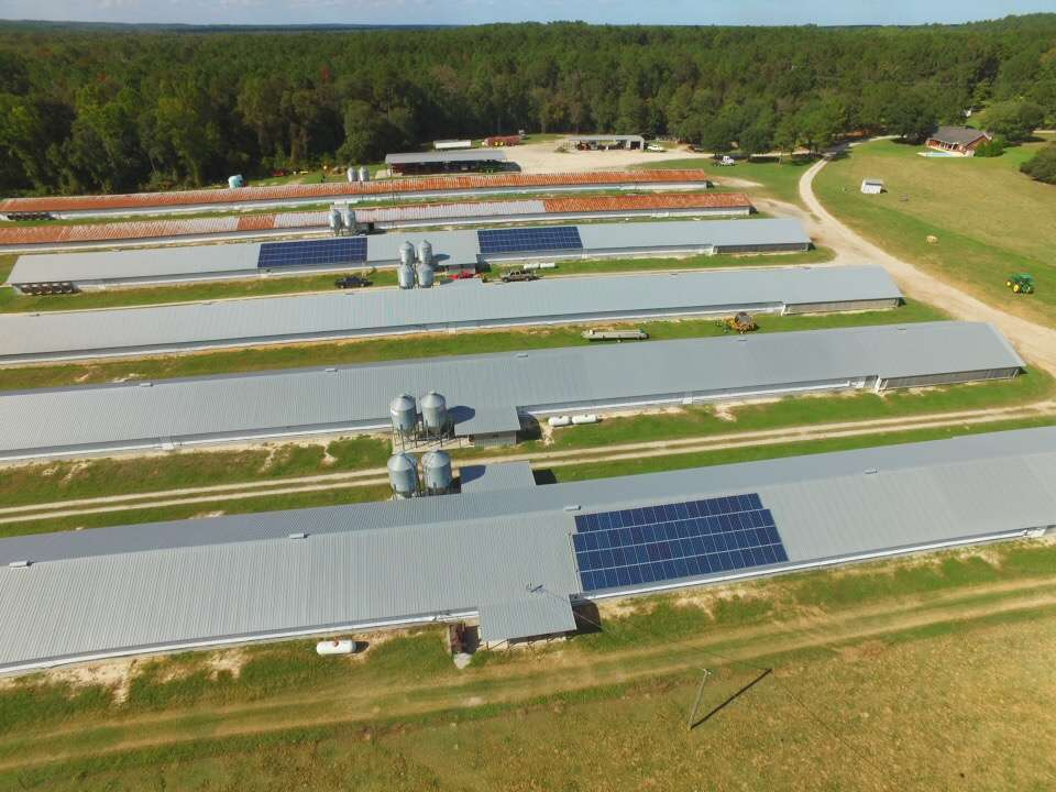 poultry houses set up with solar panels