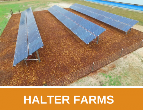Halter Farms