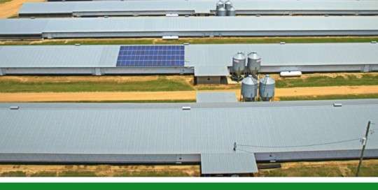 brannen poultry farm solar power