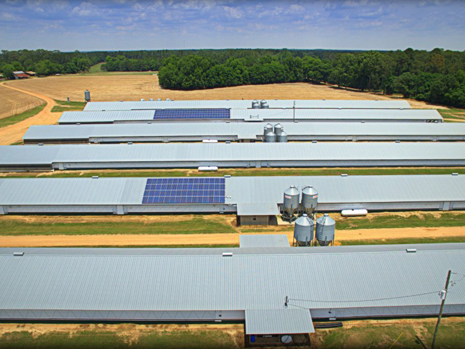 Solar Power For Poultry Farms Energy Savings For Poultry