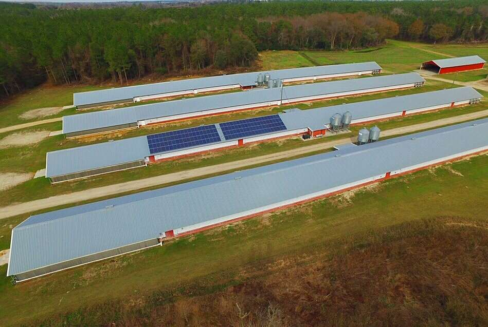 tootle farms with solar panels on poultry houses