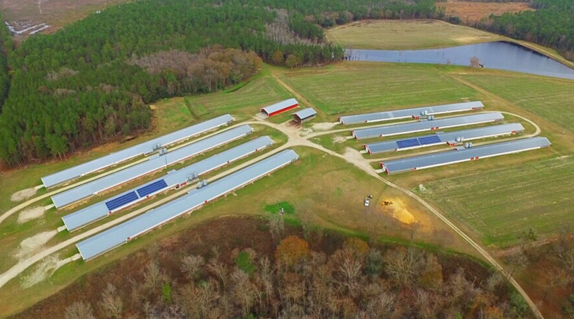 solar panels on many poultry houses