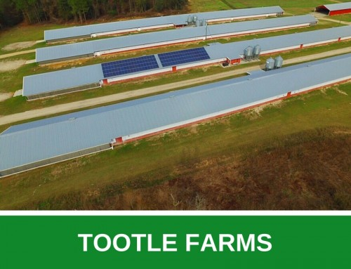 Tootle Farms